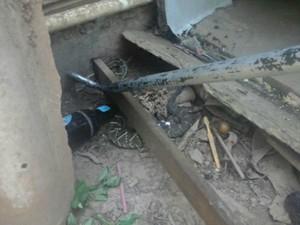 Cascavel que matou cachorro sendo capturada (Foto: Divulgação/Corpo de Bombeiros)