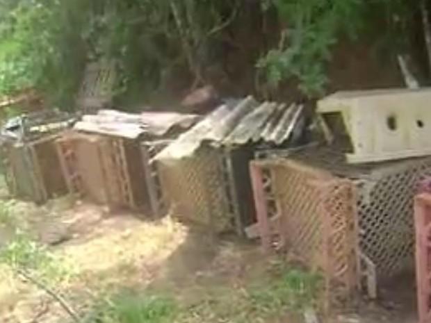 Em Teresópolis, mulher mantinha cachorros nessas caixas, sem comida e água (Foto: Marcelo Oliveira)