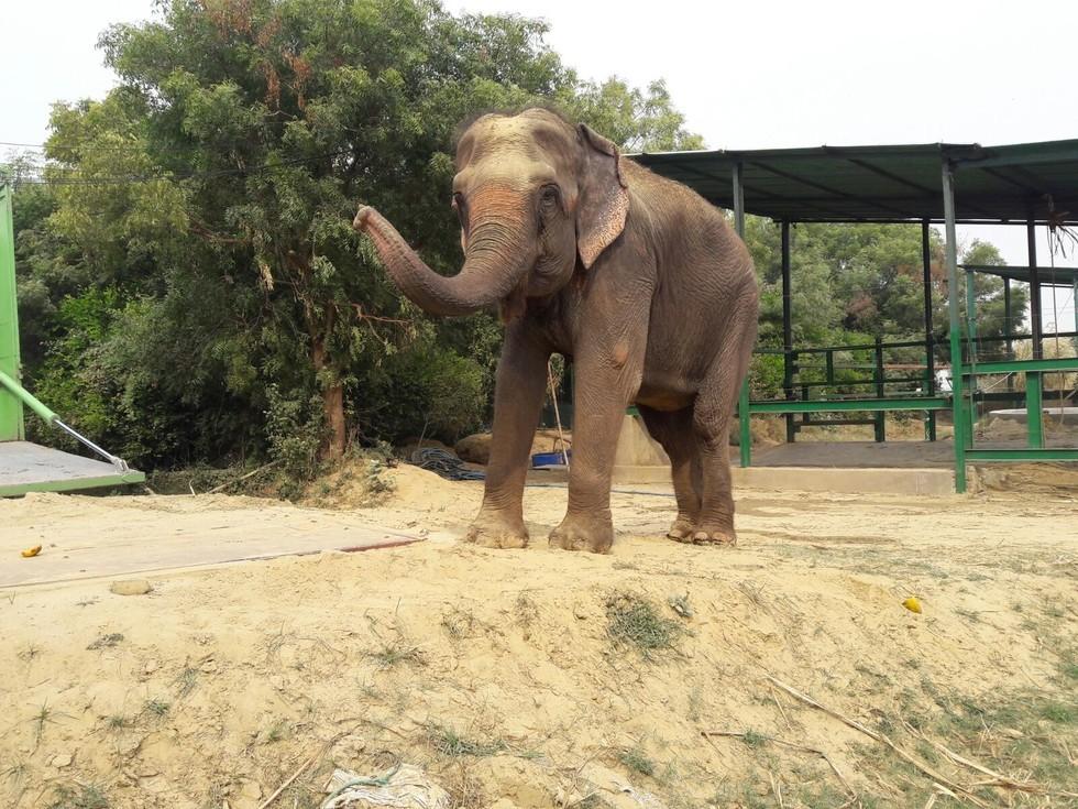 Veja a reação desses elefantes de circo ao serem libertados