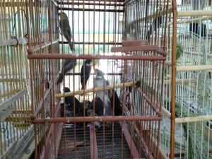 Aves foram encaminhadas para o Centro de Triagem de Animais Silvestres  (Foto: Divulgação / Polícia Militar )