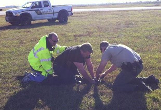 Jacaré foi capturado perto da pista principal do aeroporto de Punta Gorda (Foto: Divulgação)