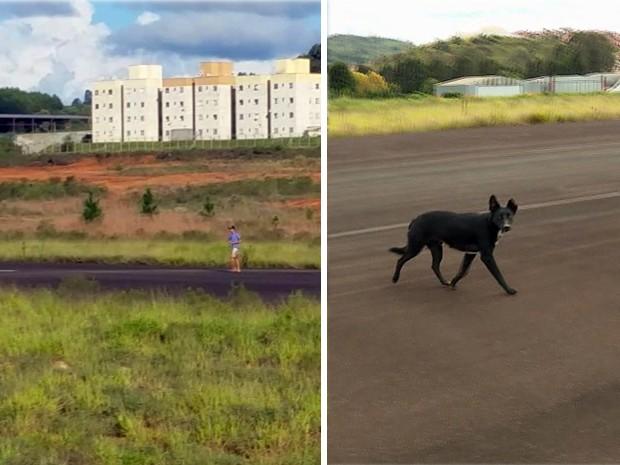 Flagrantes mostram pessoas e animais em pista de pouso do Aeroporto de Poços de Caldas (Foto: Reprodução EPTV)