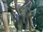 Bebê elefante é resgatado após  cair em vala