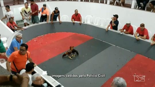 Polícia detém 30 pessoas no MA em campeonato de briga de galos