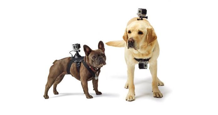 Acessório da GoPro é colocado nas costas dos cachorros (Foto: Divulgação/GoPro)