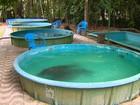 Peixes-boi que vivem em tanques serão devolvidos à natureza no AM