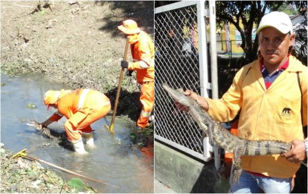 Jacaré é encontrado em ação de limpeza do igarapé do Coroado, Zona Leste de Manaus (Foto: Onofre Martins/Rede Amazônica)