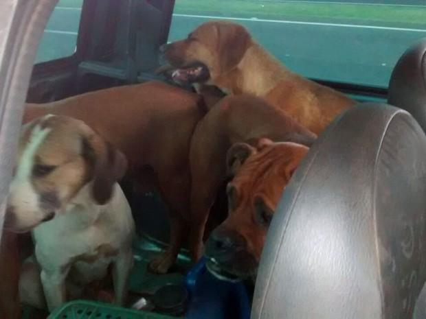 Cães estavam no porta-malas do veículo abordado pela Polícia Militar Ambiental (Foto: Polícia Militar Ambiental/cedida)