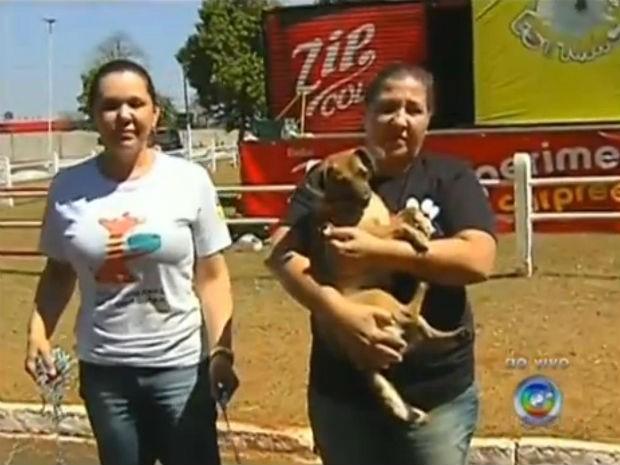 Serão colocados para adoção cerca de 200 animais (Foto: Reprodução/TV TEM)