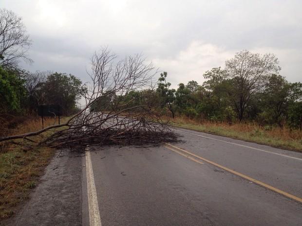 Árvore caiu em rodovia entre Palmas e Paraíso no começo da tarde desta terça-feira (Foto: Priscilla Lima/TV Anhanguera)