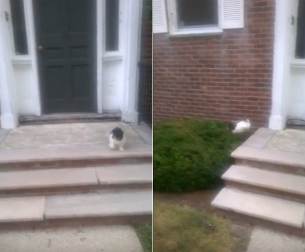 Cão 'sem noção' evitou escada e deu pulo 'kamikaze' para sair de casa (Foto: Reprodução/LiveLeak/Dcmfox)
