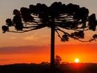 Exposição reúne fotografias do pôr do sol em Ponta Grossa, no Paraná