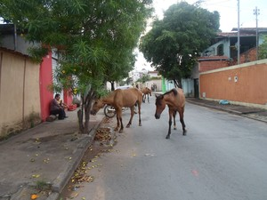 cavalo solto na rua aimoré (Foto: Cida Santana/G1)