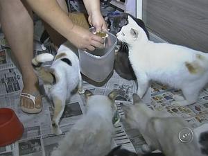 Dona de clínica não voltou para buscar gatos após fechamento de clínica (Foto: Reprodução/TV TEM)