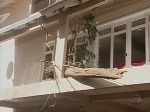 Tronco de árvore chegou no segundo andar de residência (Foto: Reprodução/RBS TV)