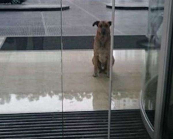 O cão adotado pela aeromoça alemã em Buenos Aires (Foto: Reprodução/Facebook)