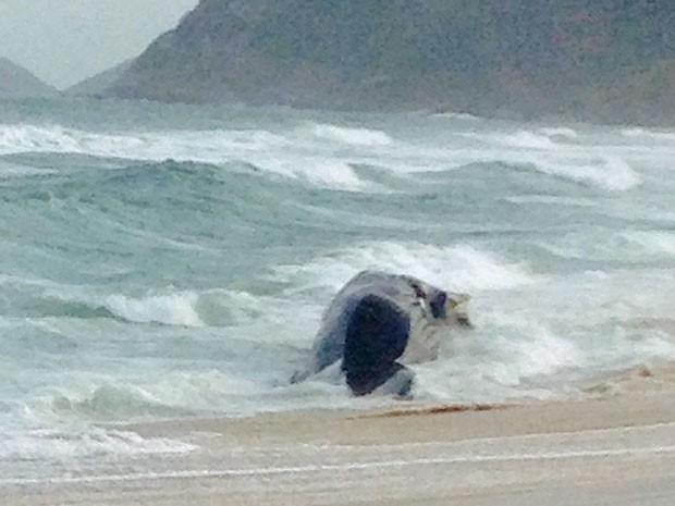 Baleia tem cerca de 15 metros, segundo biólogos (Foto: Jorge Bonacchi / Globo)