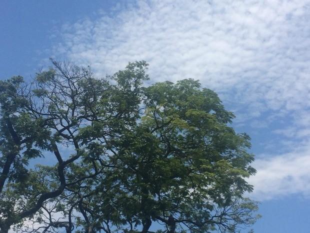 Céu de Campo Grande na tarde deste domingo (Foto: Maria Caroline Palieraqui/G1 MS)