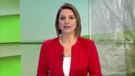 Gisele Loeblein comenta sobre a safra de trigo no estado