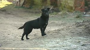 O cão Czarek (Foto: EZN)