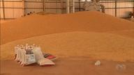 Irrigação é aliada no crescimento das lavouras de feijão em Cristalina