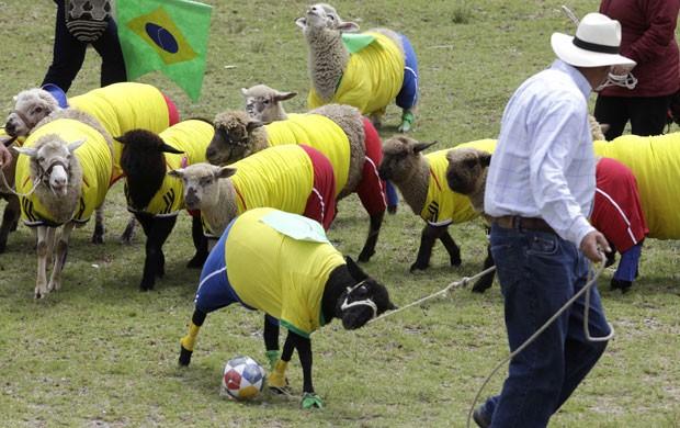 Animais usaram os uniformes do Brasil e da Colômbia (Foto: Javier Galeano/AP)