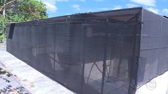 Mais de 20 macacos do zoo de BH estão isolados por causa do risco de febre amarela
