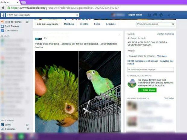 Troca de maritaca foi anunciada em rede social (Foto: Diculgação / Polícia Militar Ambiental)