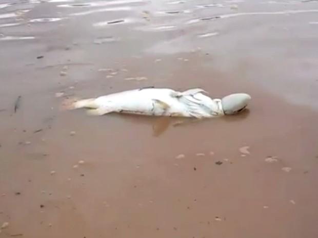 Pescador mostra peixe morto no Lago Serra da Mesa, em Goiás (Foto: Reprodução/ TV Anhanguera)