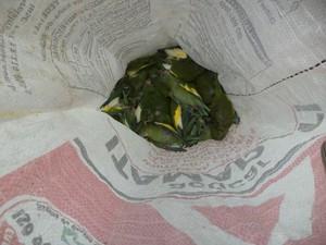 Técnicos recolheram aves mortas para a realização de testes (Foto: Ipaam/Divulgação)