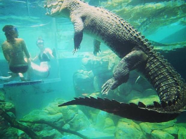 Jaula deixa turistas cara a cara com crocodilos de mais de 5 m (Foto: Reprodução/ Instagram/crocosauruscove)
