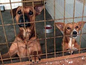 Prefeitura de Ribeirão vai começar castração de animais (Foto: Mateus ZF/ Divulgação Prefeitura)