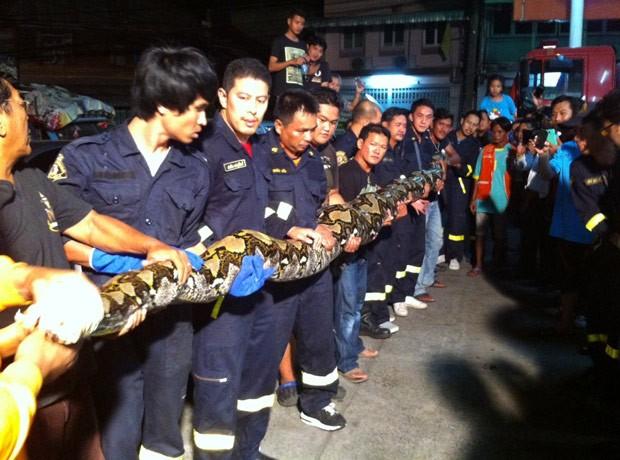 Foram necessárias quase 20 pessoas para conseguir retirar o réptil (Foto: Reprodução/Facebook/Bombeiros de Talat Phlu)