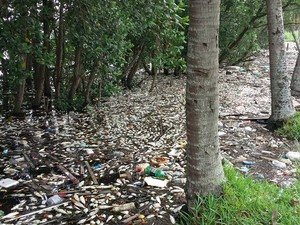 Centenas de peixes foram encontrados mortos em mangues perto da Alemoa (Foto: Robynson Senhoraes)