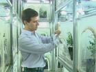 Araraquara lança fábrica de vespinhas para combater greening nos pomares