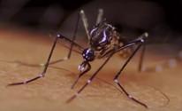Limeira registra três casos suspeitos de zika vírus; Saúde aguarda laudos (Reprodução/RBS TV)