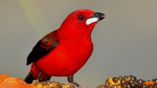 Crônica de Natal faz reflexão sobre o presente e tem aves como inspiração