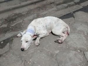 Animal foi diagnosticado com tumor e precisa de tratamento (Foto: Camila Clementino/ Arquivo Pessoal)