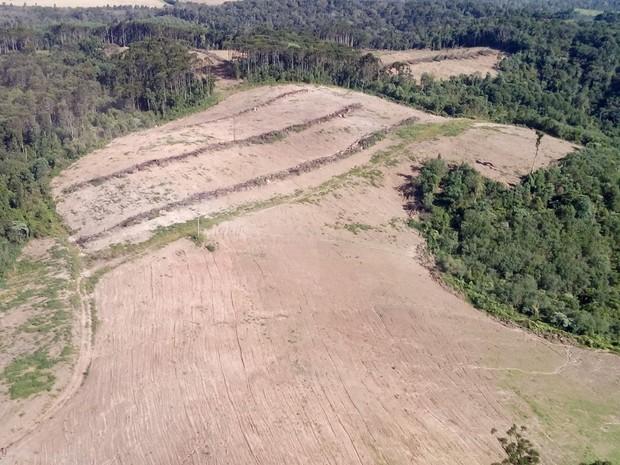 Imagem aérea mostra desmatamento na região de Prudentópolis (Foto: Divulgação/ Polícia Ambiental do Paraná)