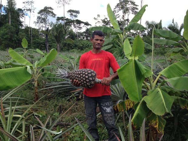 abacaxi gigante acre 2 (Foto: Duaine Rodrigues/G1)