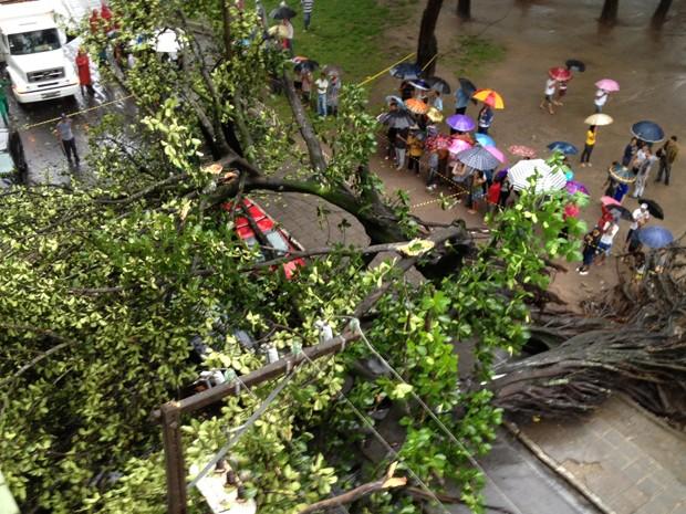 Árvore cai encima de carros no Parque Solon de Lucena, no Centro de João Pessoa (Foto: Walter Paparazzo/G1)