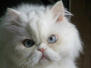 Gato (Foto: Arquivo Pessoal/Silvia Machado)