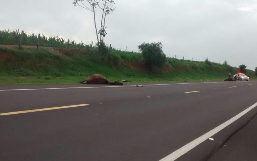 Com a batida, três cavalos morreram e um precisou ser sacrificado (Foto: José Antônio)