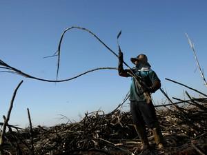 Mais de 5 trabalhadores são libertados por dia, em média, no país (Foto: Sérgio Carvalho/arquivo pessoal)