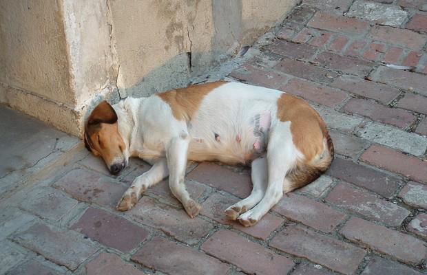 Cadelinha dorme na cidade de Novi Sad, Sérvia (Foto: Toni Petrovic/SXC.hu)
