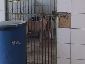 Cães do Zoonoses estão há dois dias sem comer  (Foto: Michelle Farias/G1)