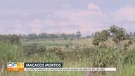 Macaco morto é  encontrado em Santa Maria