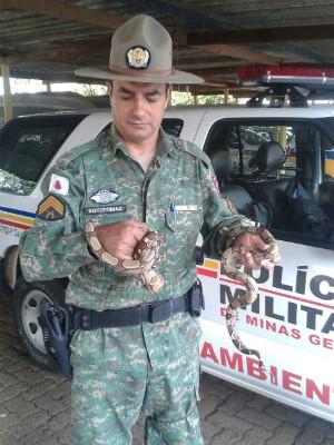 Cobras foram capturadas e encaminhadas ao Hospital Veterinário da UFU (Foto: Polícia de Meio Ambiente/Divulgação)