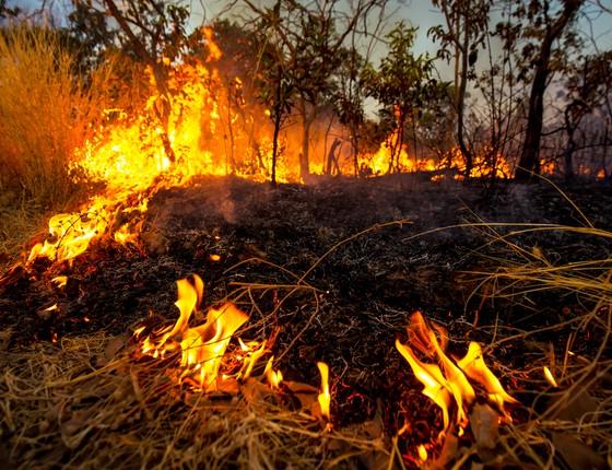 Incêndio florestal (Foto: Jim Wickens/Ecostorm)