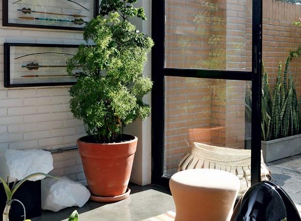Projeto da arquiteta Bruna Riscali arvore-da-felicidade-vaso-casa-plantas (Foto: Evelyn Müller/Editora Globo)